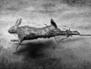 Kraft - oder wie es der tote Hase, trotz aller Widrigkeiten, in eine Kunstausstellung schaffte_1